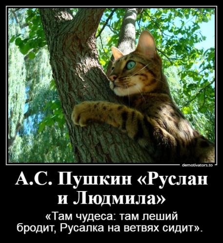 Софронова Г.В.